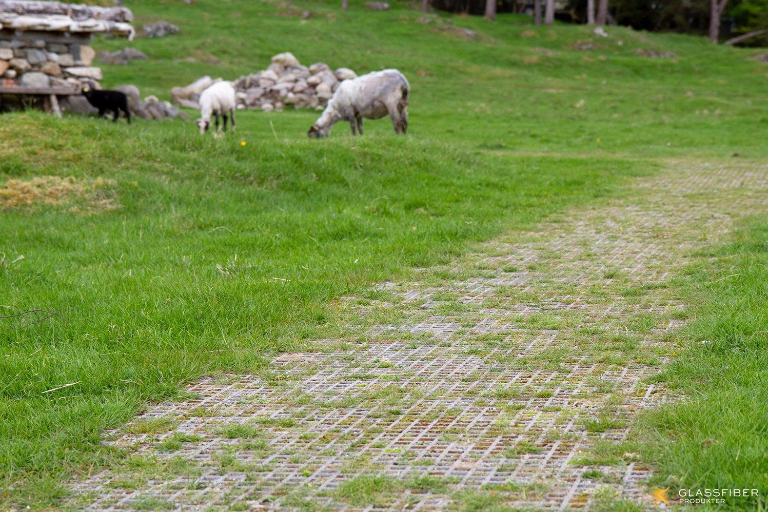 Ristene på Jernaldergården med beitende sauer